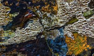 naturmønstre